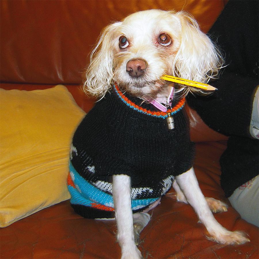 diabetes canina nina caniche bichon cães flamvet