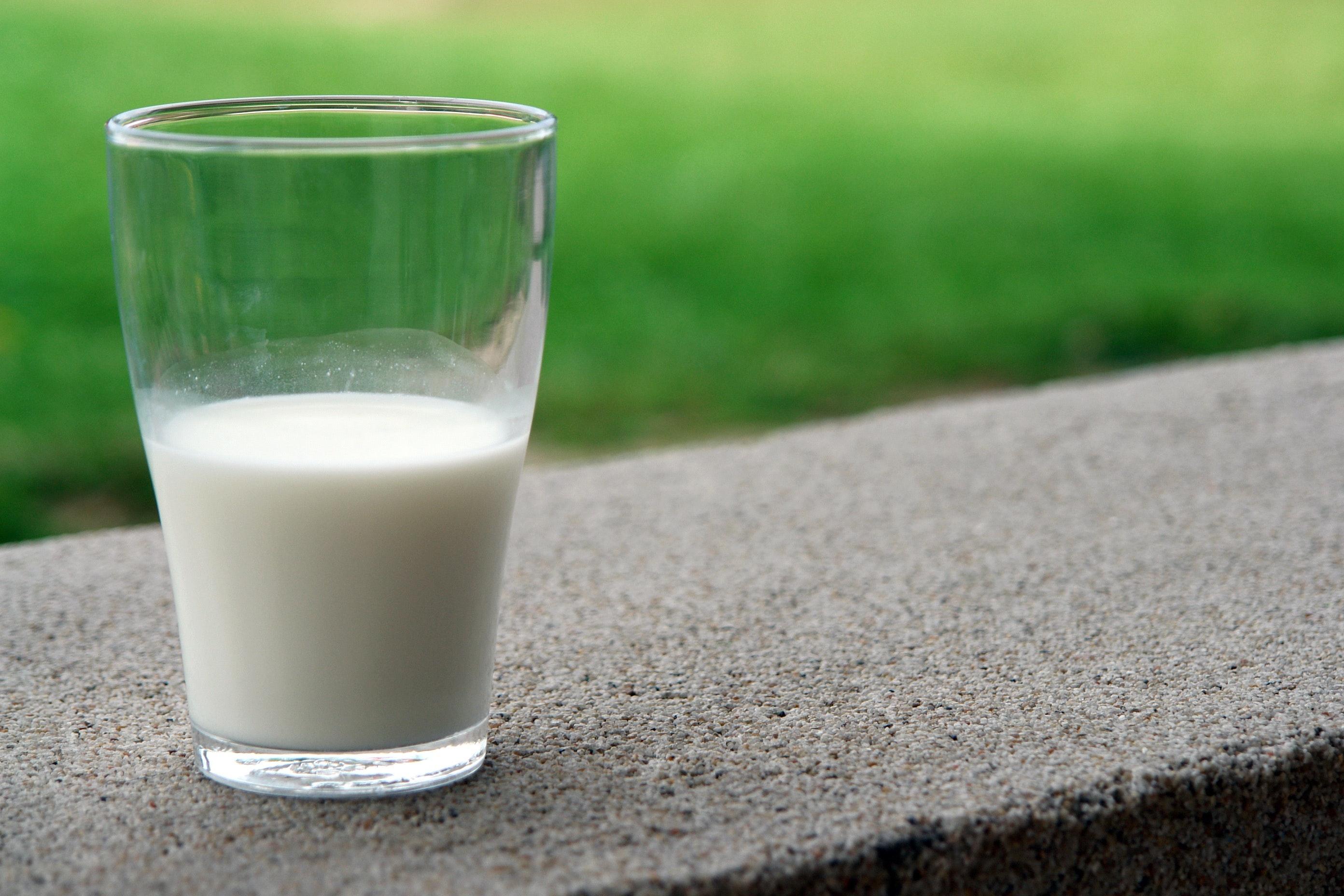 leite vaca saudável