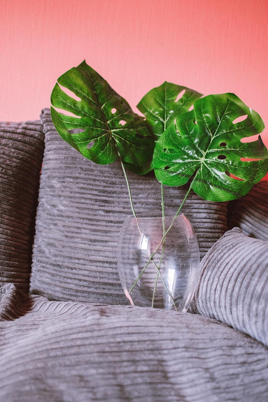 plantas decoração monstera cuidados
